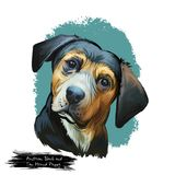 Austrian Black and Tan Hound puppy dog breed digital art illustration isolated on white. Popular pup portrait with text. Cute pet hand drawn portrait. Graphic stock images