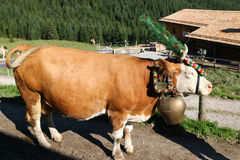 Austrian cow with a headdress during a cattle drive in Tyrol, Austria.  Royalty Free Stock Images