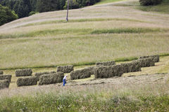 Austrian farmer is drying hay in Gailtal Royalty Free Stock Images