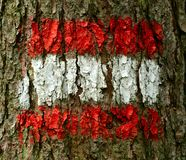 Austrian Flag On Tree Stock Photo