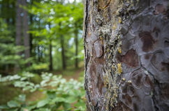 Austrian Forest Stock Photography