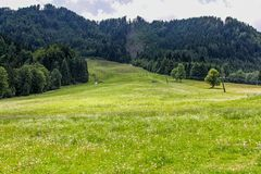 Austrian Meadow Stock Images