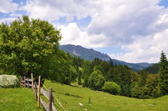 Austrian mountains. A blooming meadow at a hill in the Austrian alps with the Ötscher mountains in the background Royalty Free Stock Photography