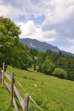 Austrian mountains. A blooming meadow at a hill in the Austrian alps with the Ötscher mountains in the background stock image