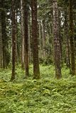 Austrian forest in summer Stock Images