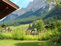 Austrian View. Alpine view of chalet and mountain Stock Images