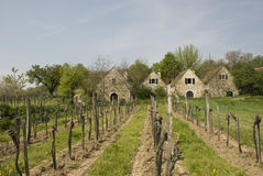 Austrian wineries. Traditional austrian wineries in burgenland Stock Image