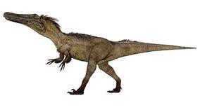 Austroraptor dinosaur -3D render. Austroraptor dinosaur walking isolated in white background -3D render vector illustration
