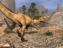Austroraptor dinosaur walking -3D render. Austroraptor dinosaur walking in the desert by sunset -3D render vector illustration