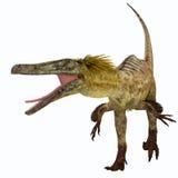 Austroraptor dinosaurie på vit royaltyfri illustrationer