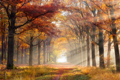Austumn forest path fall leaves Royalty Free Stock Photo