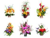 Auswahl der Blumen Stockbilder