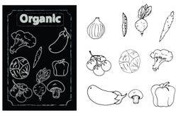 Auswahl des organischen Gemüses Stockfoto