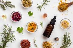 Auswahl von ätherischen Ölen und von Kräutern auf einem weißen Hintergrund, Spitze stockfoto