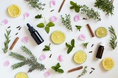 Auswahl von ätherischen Ölen und von Kräutern auf einem weißen Hintergrund Stockbilder
