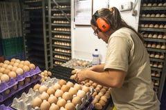 Auswahl von Eiern Lizenzfreie Stockbilder