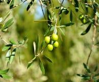 Auswahl von Oliven, Olivenöl, Andalusien, Spanien Stockfotos