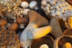 Auswahl von wilden Pilzen Stockfotos