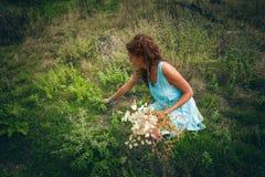 Auswahlkräuter und -blumen der jungen Frau auf sauberem wildem Berg-meado Lizenzfreies Stockfoto