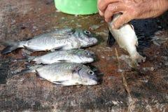 Ausweidende Fische des Fischers stockfotografie