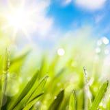 Auszüge des Grünhintergrundes des natürlichen Frühlinges lizenzfreie stockfotografie