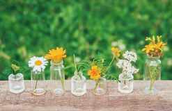 Auszüge von Kräutern in den kleinen Flaschen Selektiver Fokus lizenzfreie stockfotos