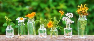 Auszüge von Kräutern in den kleinen Flaschen Selektiver Fokus stockfoto