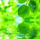 Auszugsblätter auf Wasser Stockfoto