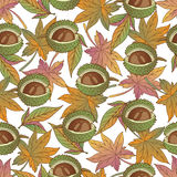 Aut leaves collect-05. Vector hand drawn seamless pattern with colorful autumn leaves Stock Images
