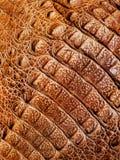 Autentisk bakgrund för alligatorlädertextur royaltyfria foton