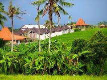 Autentisk grön risfält i Canggu i Bali på en mulen dag arkivbild