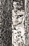 Auteurs` s grafiek: vreemd dier in de bosvos, misschien Royalty-vrije Stock Fotografie