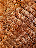 Authentic Aligator Leather Texture Background Royalty Free Stock Photos