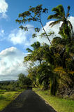 Authentic Backroad on Big Island. Authentic curving backroad on the Big Island of Hawaii. Palm trees and tulip trees frame small narrow blacktop royalty free stock images