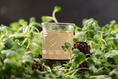 Authentic drink of the northern peoples of Russia. Alcoholic beverage. Tincture of forest berries. Alcoholic drink on a green back. Ground, a glass on the grass Stock Image