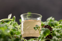 Authentic drink of the northern peoples of Russia. Alcoholic beverage. Tincture of forest berries. Alcoholic drink on a green back. Ground, a glass on the grass Stock Photography