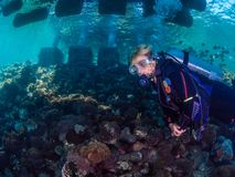 Lady diver with school of diamondfish royalty free stock photos