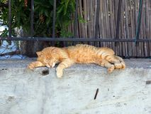 Authentic Ginger Tabby Cat Sleeping on Garden Wall. An authentic adopted stray ally rescue ginger tabby cat sleeping happily on a concrete garden wall Stock Photo
