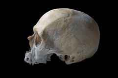 Authentic human skull Royalty Free Stock Image
