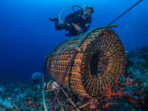 Traditional bamboo woven fish trap. Authentic image of a female diver hovering above an artisanal fish trap, or bubu, used by local subsistence fishermen to Stock Images