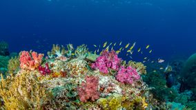 Free Authentic Outstanding Natural Beauty. Misool, Raja Ampat, Indonesia Stock Photography - 151394352