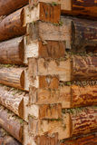 Authentic wall laying of raw logs. Novgorod region, Russia. Traditional Russian construction of raw pine logs Stock Photography