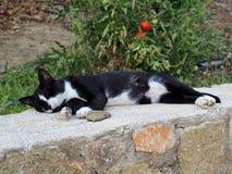 Authentieke Zwart-witte Cat Sleeping op Muur Royalty-vrije Stock Fotografie