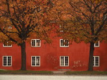Authumn in Copenhagen Denmark. The tree leaf change color from green to yellow until red Stock Photography