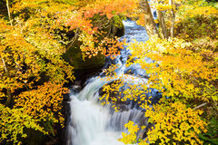 Authumn waterfall with colorful maple leaf Stock Photography