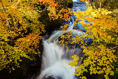 Authumn waterfall with colorful maple leaf Stock Photo
