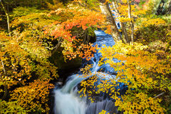 Authumn waterfall with colorful maple leaf Royalty Free Stock Images