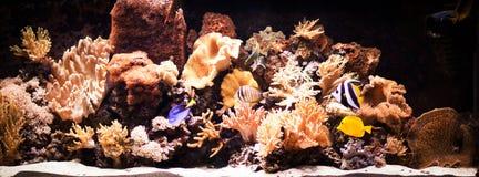 Autiful zasadzał tropikalnego słodkowodnego akwarium Obraz Stock
