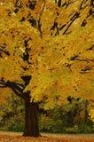 autmn结构树 库存图片