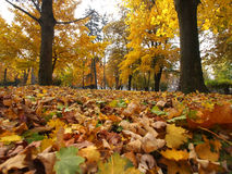 Autmn в парке Стоковое Фото